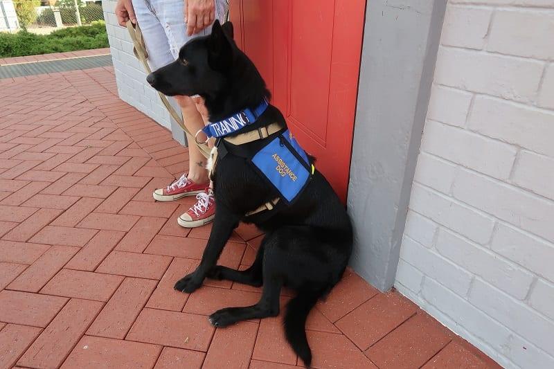 Ben Dog Training